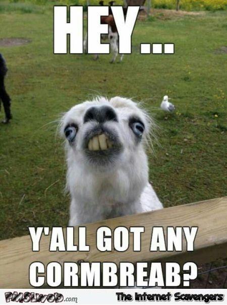 Funny redneck alpaca meme