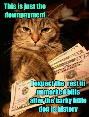 dogs caption Cats money hitman