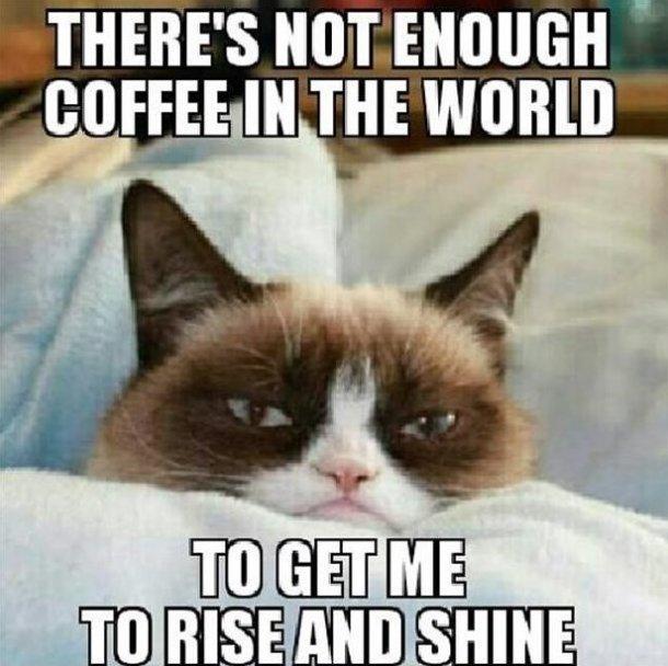 grumpy cat coffe
