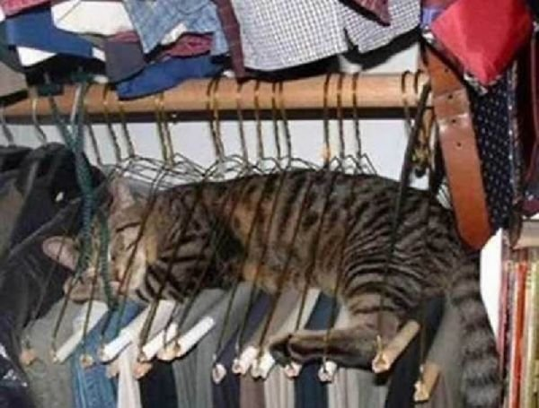2013 Funny Cat Sleeping s Strangest Places for a Cat Nap 9