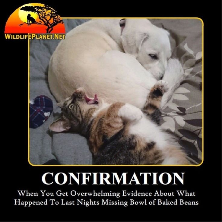 Dog and Cat Confirmation Funny Animal Caption Wildlife Planet