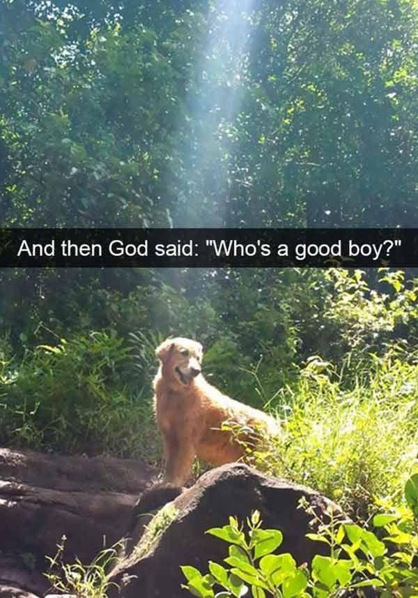 God & Dogs funny snapchat humor dogsfunnylove funnydoghumor