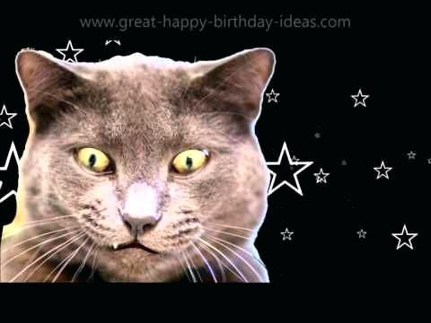 Happy Birthday Cat Ecard Mega Happy Birthday Birthday Happy Birthday Happy Birthday And Birthdays Funny Cat Happy Birthday Cards