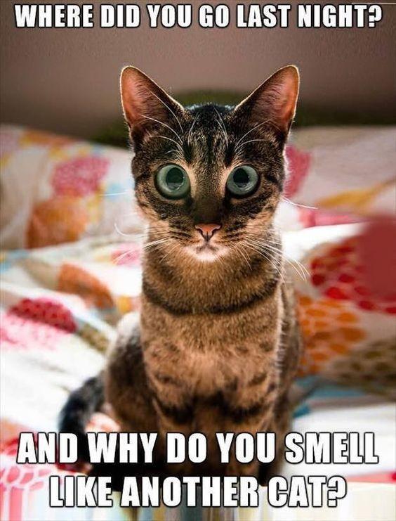 30 Hilarious Cat Memes Cat Memes Funny
