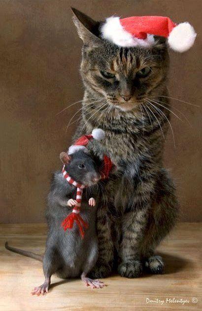 Santa cat and rat friends