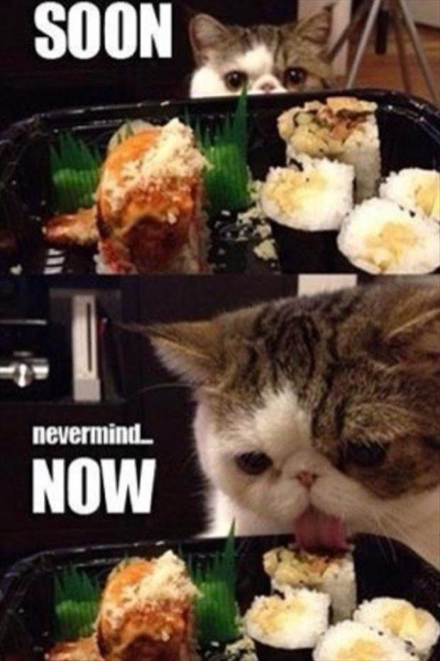funny cat soon meme
