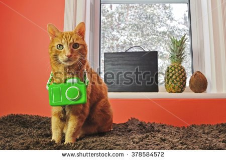 A fun concept image for pet travelers Indoor cat wants to escape the winter blizzard