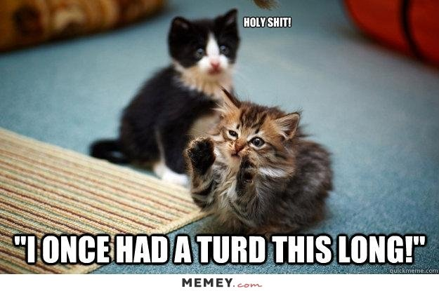 Get the Beautiful Funny Cute Scary Kitten and Cat Quotes and Memes