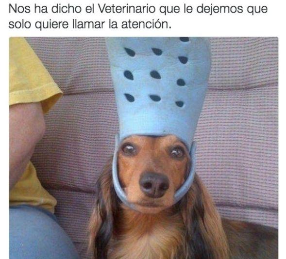 28 Memes de perros que te harán derramar lágrimas de risa