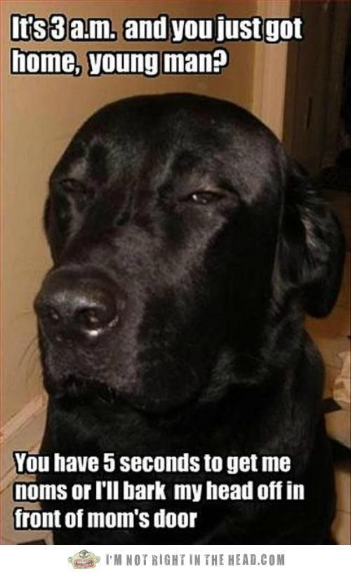Black Lab Blackmail Black Lab Blackmail Funny Dogs