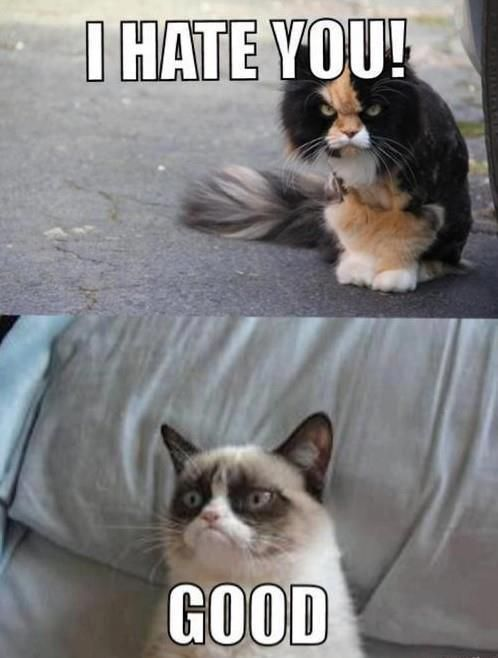 I might be a the crazy cat lady one day I cant stop laughing at these grumpy kitty memes