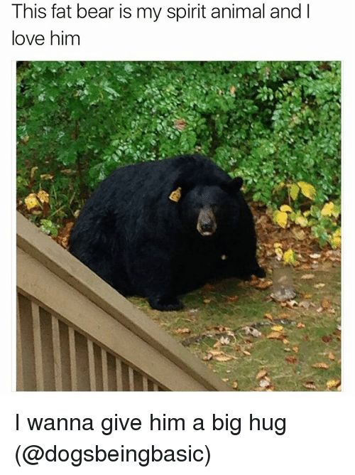Animals Funny and Love This fat bear is my spirit animal and l