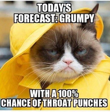 FriendLife Funny Grumpy Cats Grumpy Kitty Grumpy Cat Quotes Grump Cat Cat