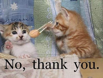 funny cat photos with quote about say no