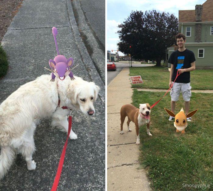 pokemon go dog walking animal shelter muncie 14