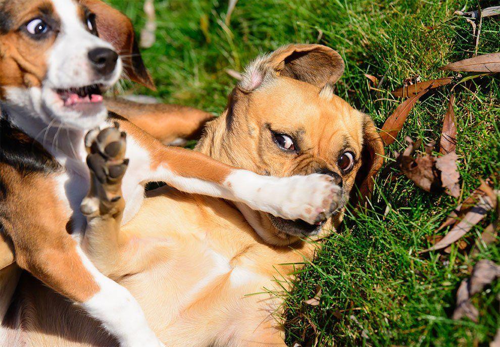 Premios de Fotografia de Animales Domesticos 2017 4