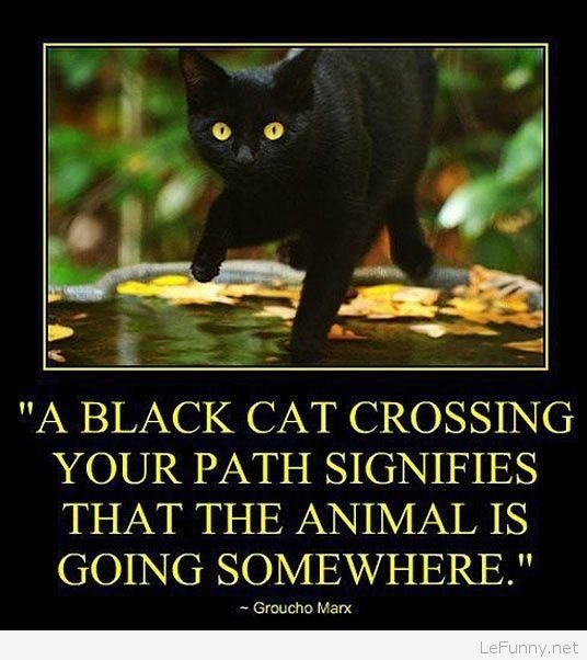 Funny quote about black cats