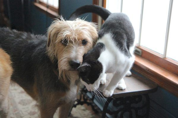 Dogs Eating Cat Poop — My Story