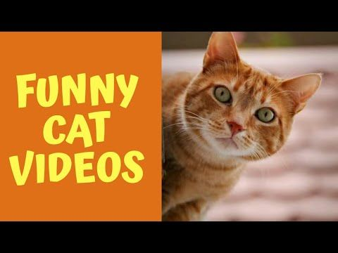 Funny Cats Doing Funny Things – Funny Cats Failing to Jump Fails pilation