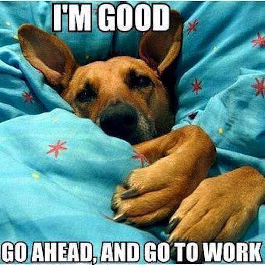 Looks like my Sophie 😢 DOGS Pinterest