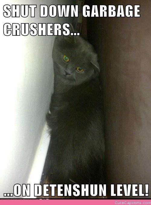 Shut down garbage crushers on detenshun level starwars cat funny meme cat