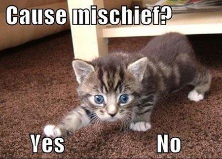 Cute Funny Cat Meme