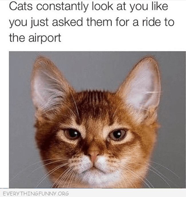 funny captions funny cat pictures funny photos funny so true funny instagram
