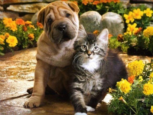 Cute Brown Pet Dog and Cat photos