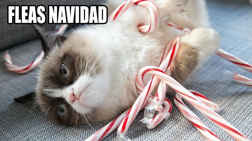 Fleas Navidad s and for Tumblr Pinterest and Twitter