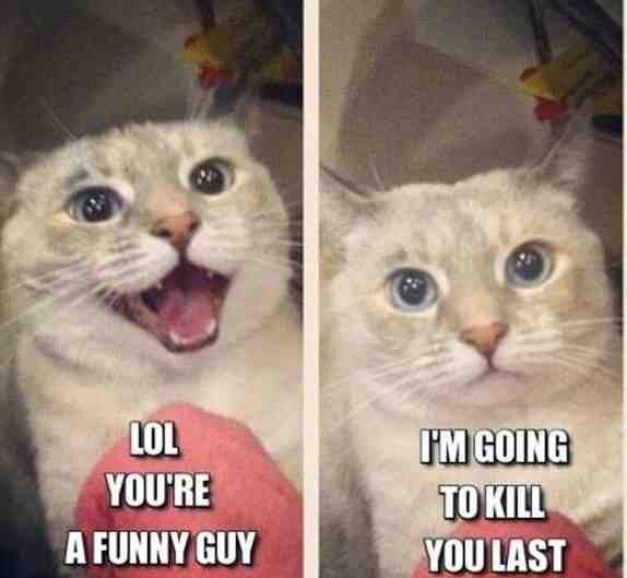 I laugh even more because it looks exactly like my cat