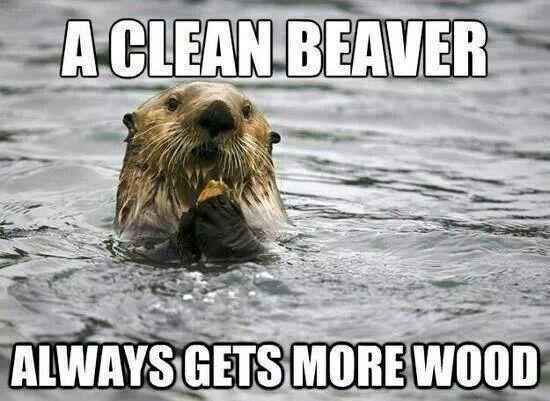 Funny Beaver Fail Funny Gifs Funny Humor Funny