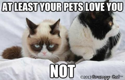 Her memes are just legendary and we have thoroughly hand selected a few of the best Grumpy Cat memes that hopefully will crack you a smile or even make you