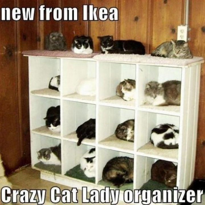 "55 Funny Cat Memes ""New from IKEA Crazy Cat Lady organizer """