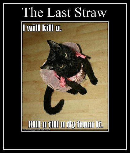 funny pictures black cat dress will kill you