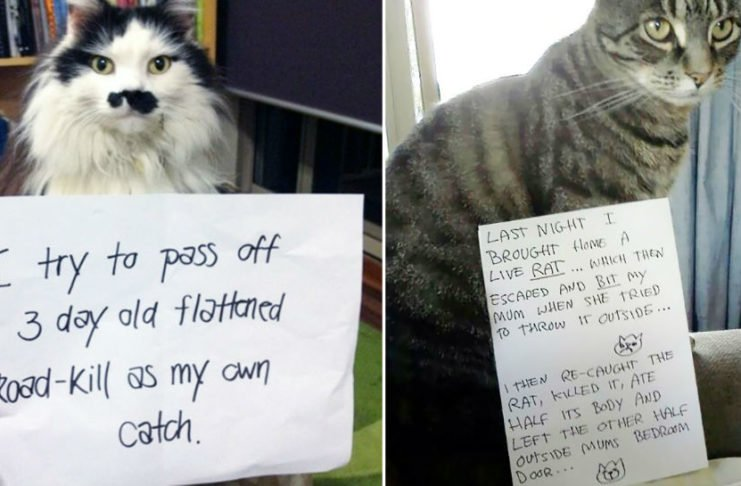 15 Guilty Cats Shamed For Their Crimes