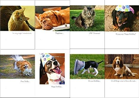 DOG AND CAT FUNNY BIRTHDAY CARDS AT A GREAT PRICE GREAT FOR MOM DAD