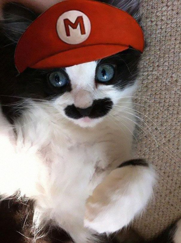 3 Mario Cat