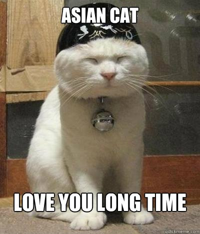 ASIAN CAT LOVE YOU LONG TIME