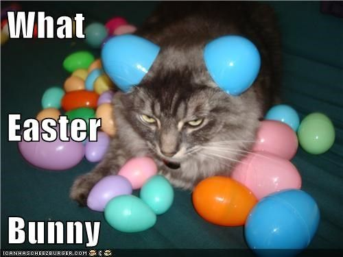 What Easter Bunny Lolcats cat memes funny cats funny cat pictures with words on them funny pictures cat memes