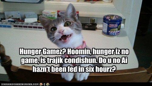 funny cat pictures wut kitteh finks uv hunger games