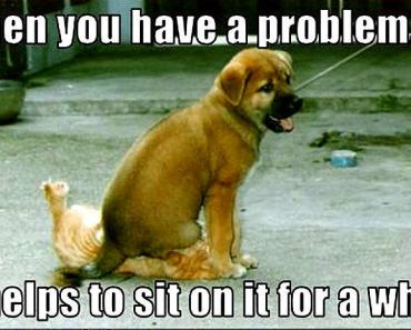 Get the Fresh Funny Dog Cat Pictures