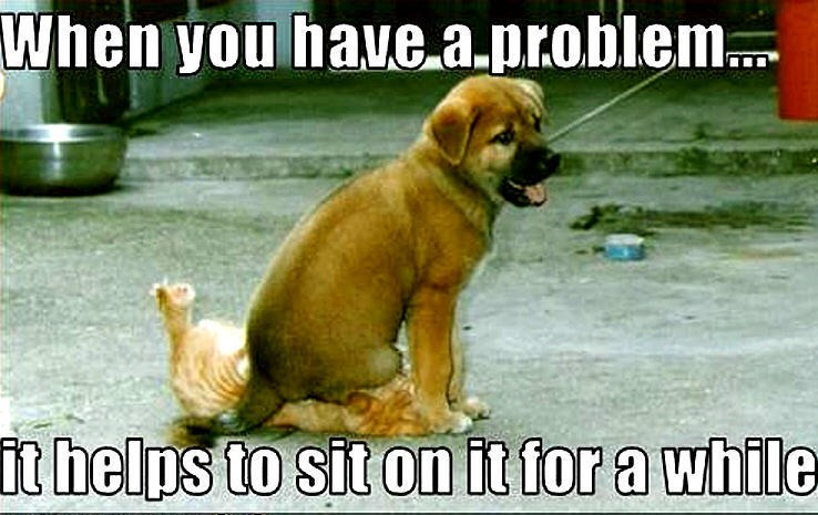 Animal Humor images dog & cat funny wallpaper and background photos
