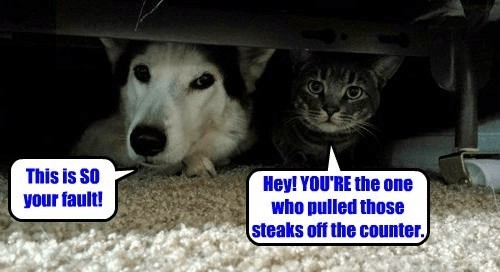 Funny meme of cat and dog hiding under the bed and blaming each other for their
