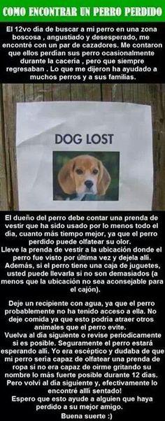 Para perros perdidos
