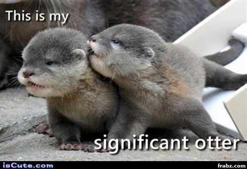 Significant Otter Meme Generator Captionator Caption Generator Frabz