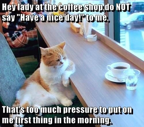 animals wake up coffee caption Cats funny Morning Sunshine