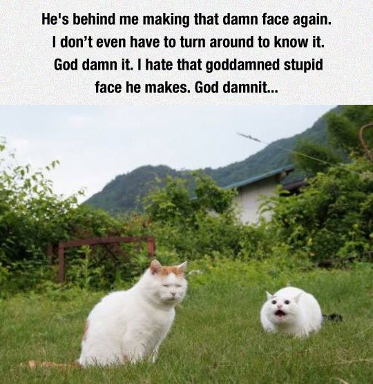funny cat face annoying mad