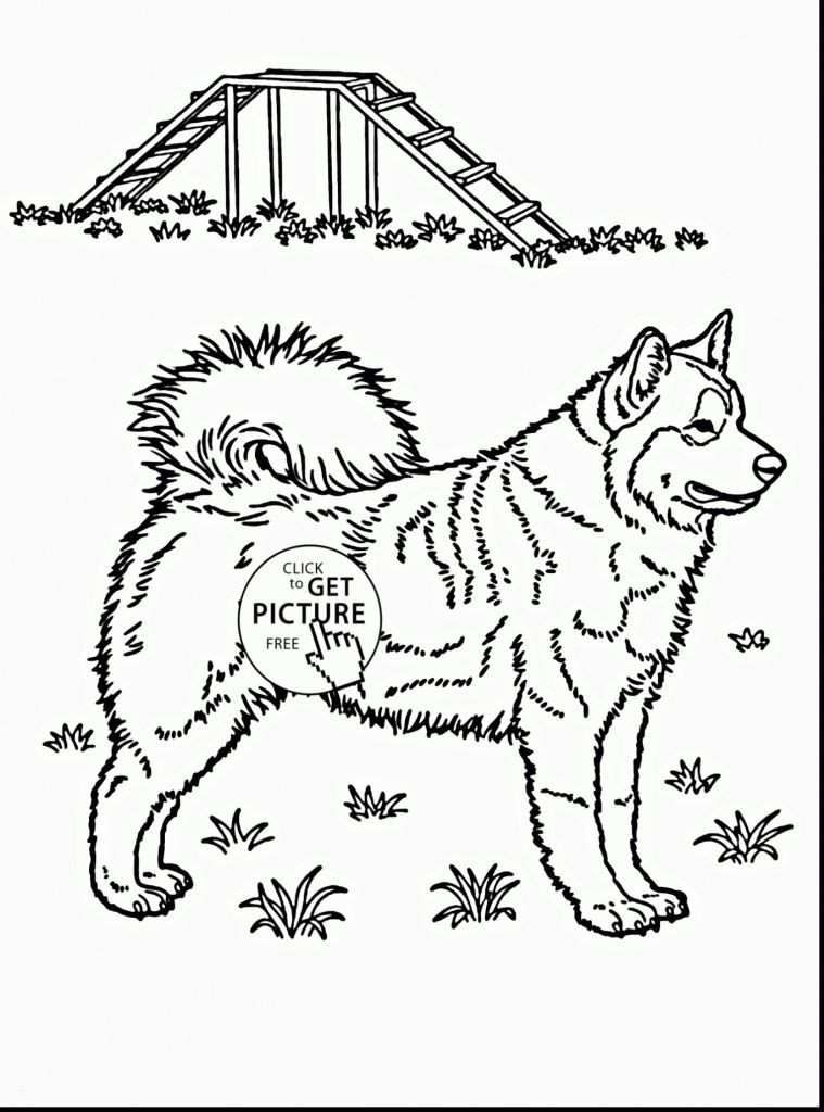 Pet Coloring Pages Beautiful Beautiful Coloring Pages Fresh Https I Pinimg 736x 0d 98 6f for