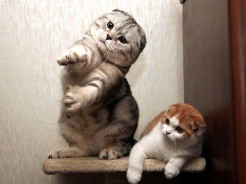 Cats dancing to music funny cat dance pilation