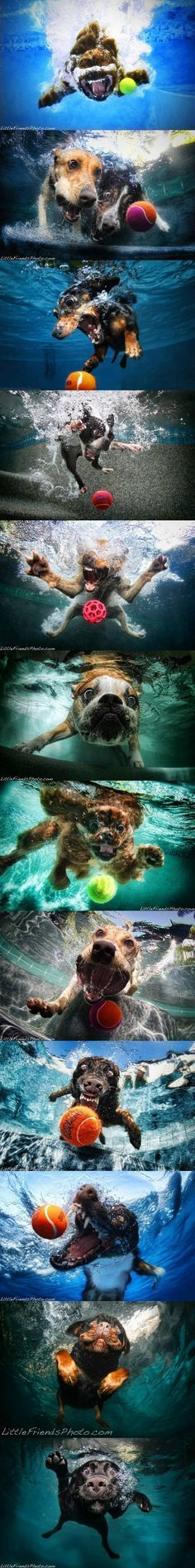 underwater dogs Silly Dogs Funny Dogs Cute Dogs Funny Animals I Love